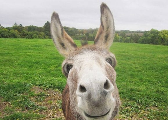A donkey enjoying life at Donkey Heaven, the Scottish Borders donkey sanctuary