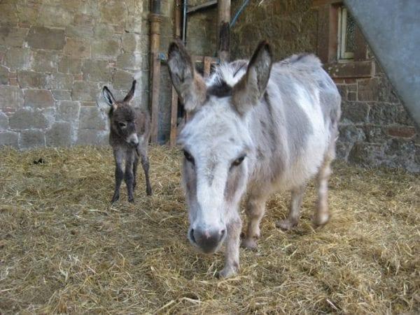 Sweet Pea (foal) Rebecca (mum)